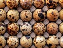 Ljekovitost prepeličjih jaja